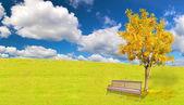 Arbre automne doré et le banc sous le ciel bleu — Photo