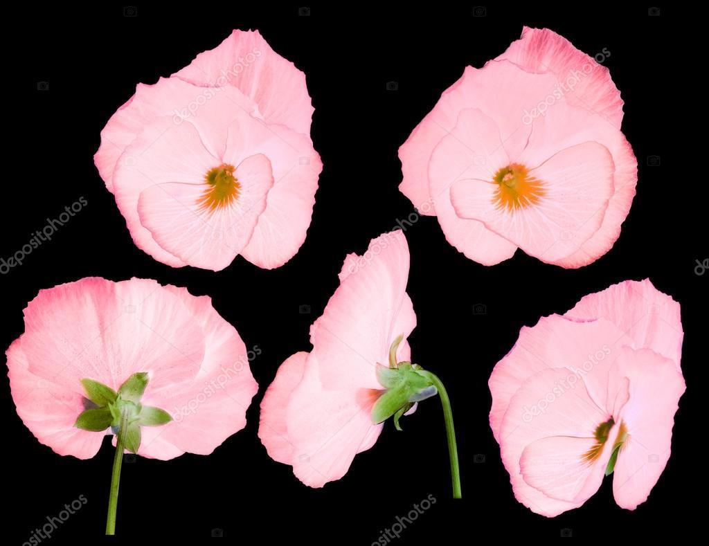 Фото цветов с разных сторон