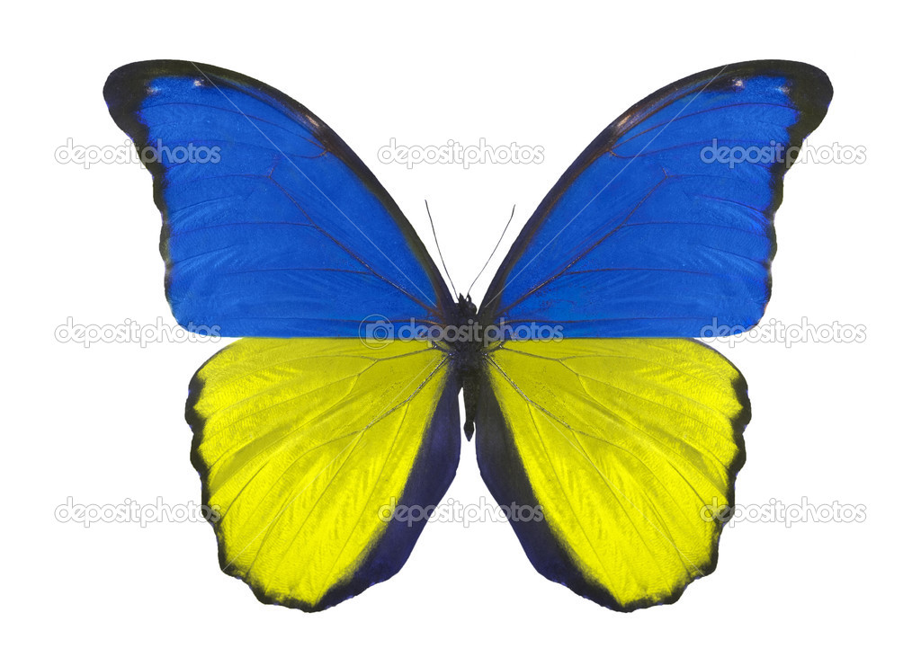 Indian Flag Butterflies: Butterfly In Ukraine Flag Colors