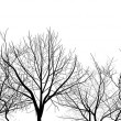 Bare tree branches isolated on white — Stock Vector #24182561
