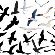 Royalty-Free Stock Vector Image: Gulls collection isolated on white background