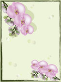 Ljus rosa orkidéer på grön bakgrund — Stockvektor
