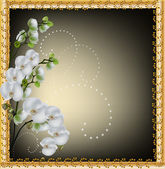 White orchid flowers in gold frame — Stock Vector