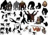 Large collection of different monkeys — Stock Vector