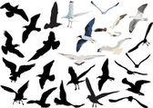 Gulls collection isolated on white background — Stock Vector