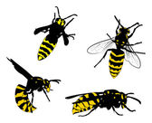 Yellow and black wasps collection — Stock Vector