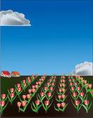 Rode tulp veld onder blauwe hemel illustratie — Stockvector