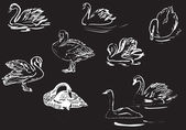 White swan drafts collection on black — Stock Vector