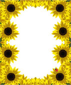 Frame of gold sunflowers — Stock Vector