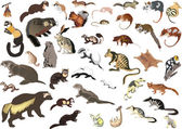 Large collection of small animals — Stock Vector