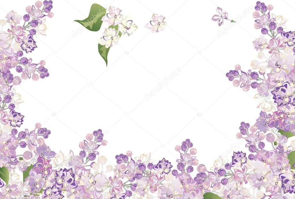 Flores Lilas Con Rosas Sobre Fondo: Marco De Flores Lilas Hald Aislado En Blanco