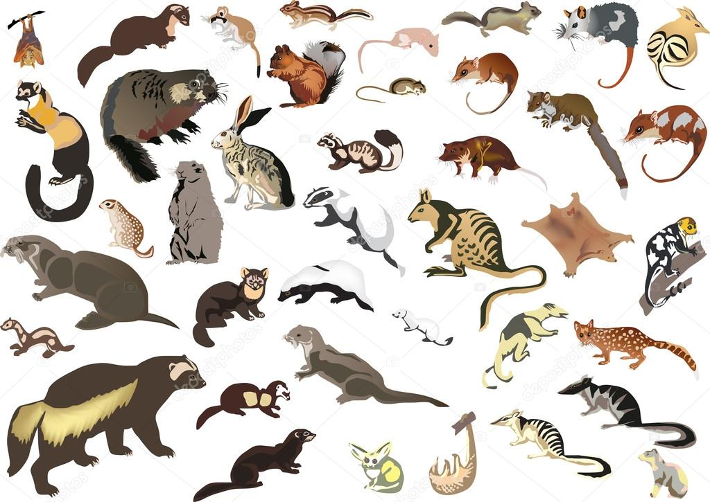 animals collection illustration wild vector background pas dr depositphotos