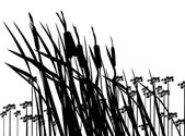 Bulrush-silhouette — Stock Vector