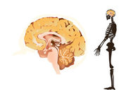 Brain and skeleton isolated on white — Vector de stock