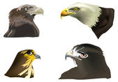 Four eagles portraits on white — Stock Vector