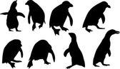 Eight penguin silhouettes isolated on white — Stock Vector