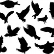 Twelve pigeon silhouettes — Stock Vector