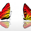 Two red and yellow butterflies — Stock Vector #24202319