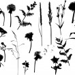 Collection of wild flowers silhouettes — Stock Vector #24202625