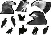 Grey and black eagles collection on white — Stock Vector