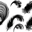 Stock Vector: Six black fluffy feathers isolated on white