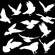 Twelve dove silhouettes isolated on black — Stock Vector #34798609
