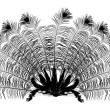Peacock feather fan silhouette on white — Stock Vector
