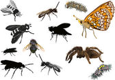 Set of twelve isolated insects — Stok Vektör
