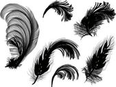 Six black fluffy feathers isolated on white — Stock Vector