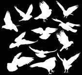 Twelve dove silhouettes isolated on black — Stockvector