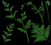 Set of green ferns isolated on black — Stock Vector