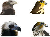 Set of four eagles portraits — Stock Vector