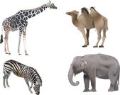 Four color animals on white background — Vetorial Stock