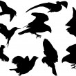 Stock Vector: Nine flying birds silhouettes isolated on white