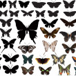 Color and black butterflies collection on white — Imagen vectorial