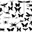 Stock Vector: Insects and spiders collection on white