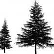 Постер, плакат: Two black firs isolated on white background