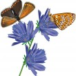 two orange butterflies on blue flowers — Stock Vector