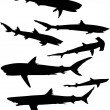 Set of sharks isolated on white — Stock Vector