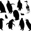Stock Vector: Penguin silhouettes set isolated