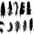 Fourteen black feathers — Image vectorielle