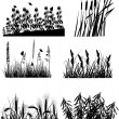 Set of six different plants silhouettes isolated on white — Stock Vector