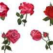 Five isolated red roses collection — Stock Vector #34806917