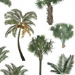 Green palm trees collection isolated on white — Stock Vector