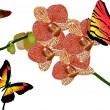 Stock Vector: Red orchid flowers and butterflies on white