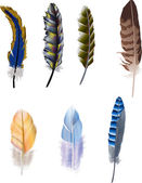 Seven color isolated feathers — Vecteur