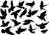 Eighteen dove silhouettes isolated on white — Stock Vector