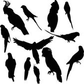 Twelve parrot silhouettes collection — Vector de stock