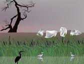 Herons and rush in lake — Stock Vector
