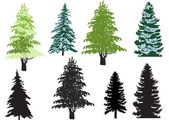 Eight firs isolated on white — Stock Vector